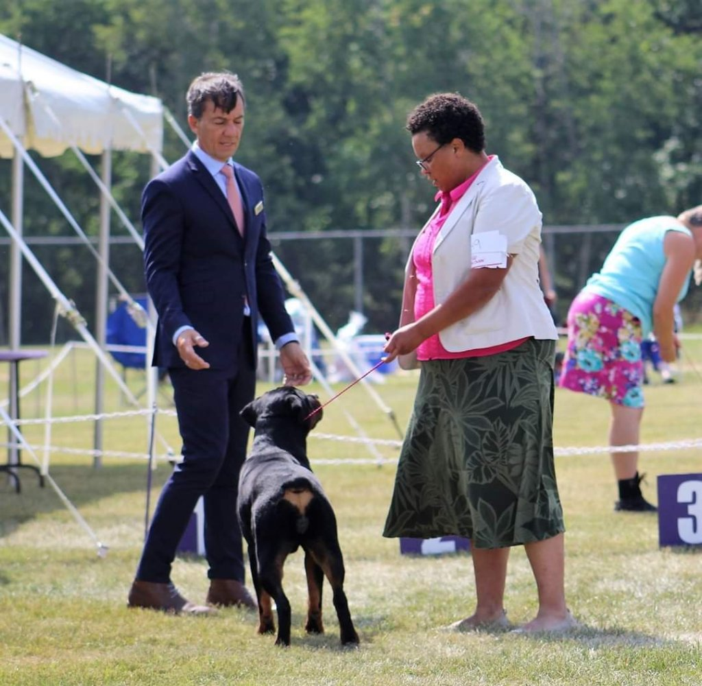 A Brown Woman in an outdoor Conformation Dog Show ring presents her Rottweiler to a white male judge